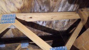 Mold-Remediation-Wood