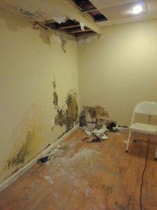 Mold-Infestation-South-Windsor-CT-Home