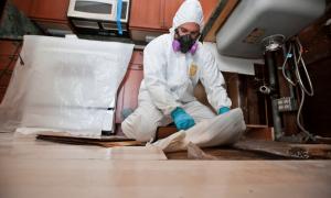 Mold-Remediation-Wilmington, NC