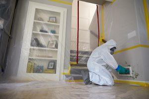 Mold Remediation in The Woodlands, TX