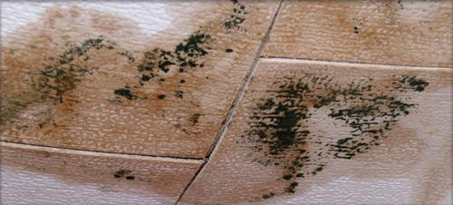 Mold Remediation in Valparaiso, Indiana