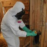 mold cleaning falls church