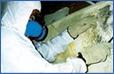 Mold Remediation Rockford IL