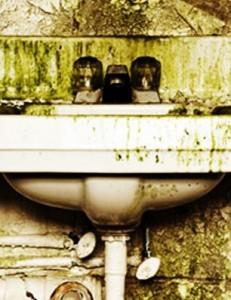 Mold Remediation Arlington VA