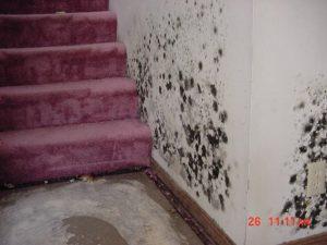 Mold Remediation Services Denver Colorado