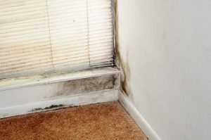 Mold-Removal-Fort-Wayne-IN
