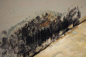 Mold Damage Restoration - Bethesda, MD
