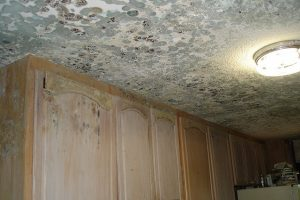 Mold Remediation – Waterford, CT