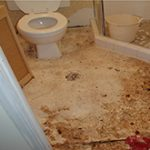 Before sewage cleanup