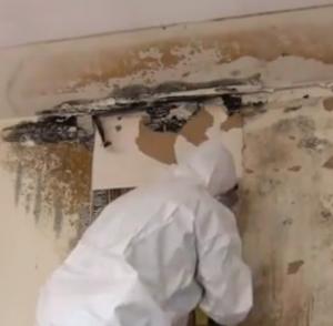 Mold Remediation - Leesburg FL 34748