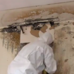Mold Remediation for Orlando, FL