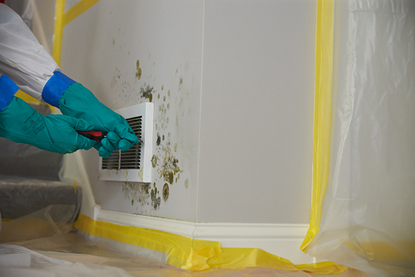 ServiceMaster Restoration by Complete - Mold Remediation in Clifton, NJ