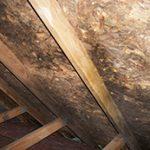 Mold Removal Services in Oak Lawn, IL