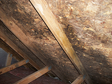 Mold Remediation for Tinley Park, IL